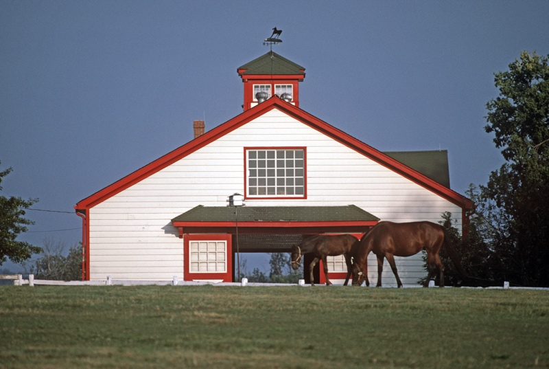 Thoroughbred Stables